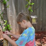 Summer Fun: Making Homemade Bird Feeders