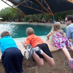 Summer Fun: Go to Sea World